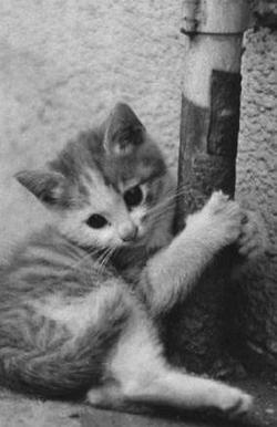 いとしき猫たち